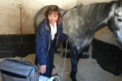 Tyrrells Equine - Lesley Young